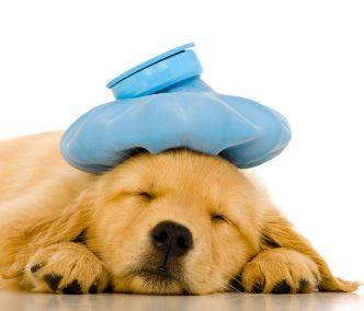 Dog Having Stroke Like Symptoms