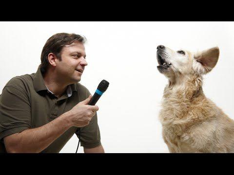 Kläffender Hund - wie du richtig damit umgehst ! - YouTube