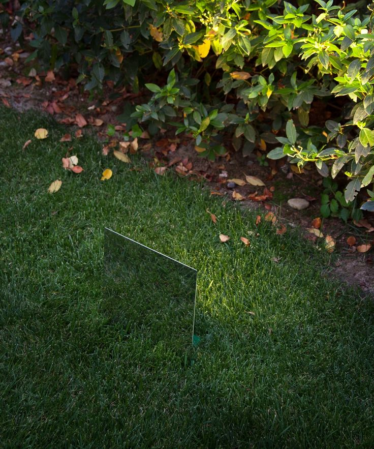 Lush green lawn - best light to show it off! Groppi