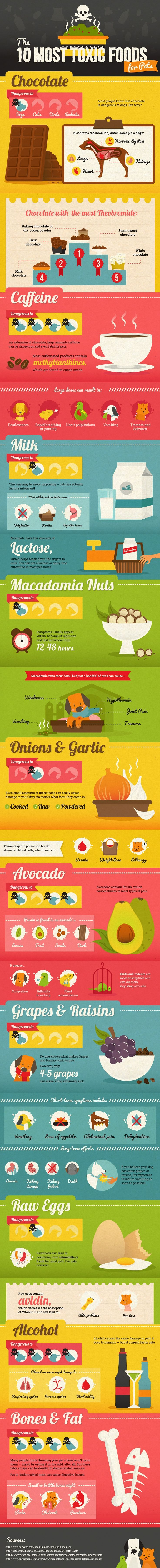 Best 25+ Human food for cats ideas on Pinterest | Human food for ...