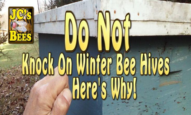 Honeybees In Torpor (Explained) Bee, Bee do, Bee hive