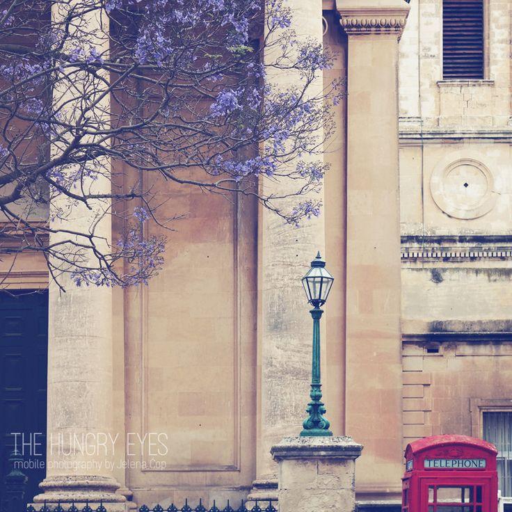 Valletta Photography, Malta Photography, Jacaranda Purple Tree Photography…