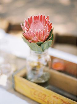 Protea, South Africa's wild flower