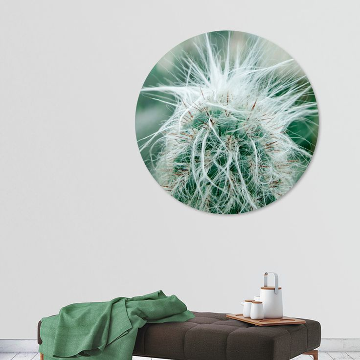 «Cactus 05», Exclusive Edition Disk Print by VanessaGF - From 80€ - Curioos. #cactus #photography #prickly  #nature #succulent #artprint  #diskrprint #homedecor @Curioos
