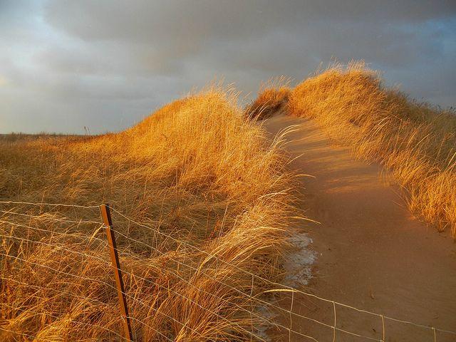 Where Two Hearts Meet (Prince Edward Island Dreams)