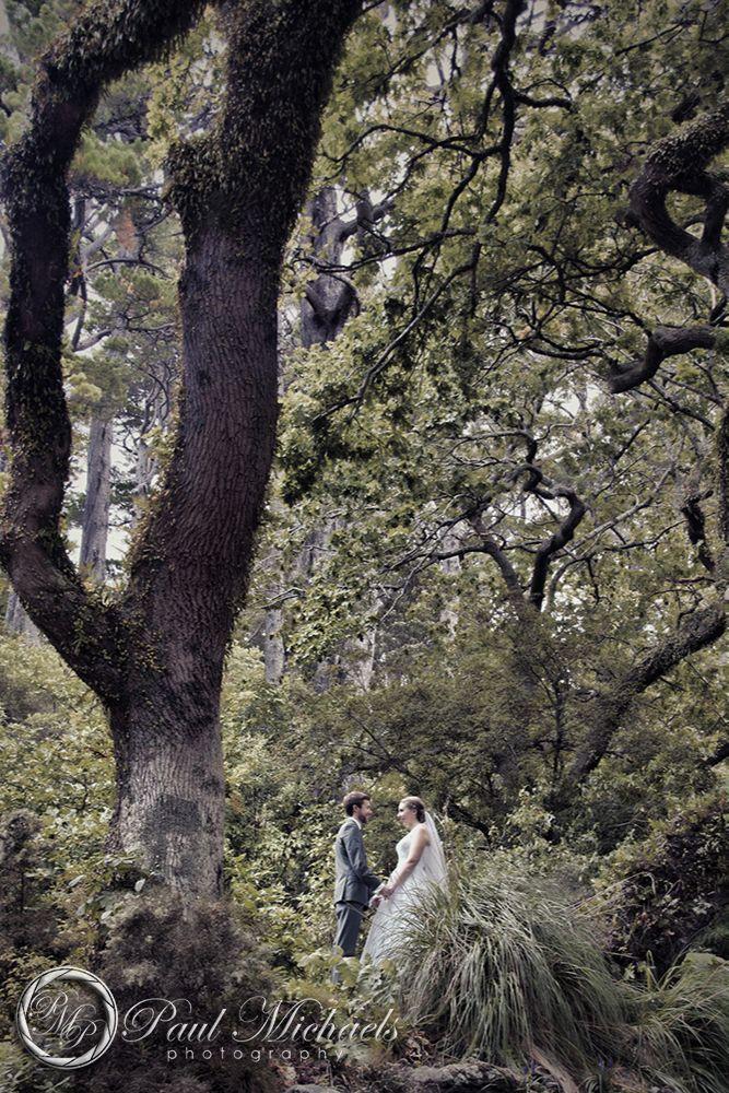 Wedding photos at Wellington botanical gardens.