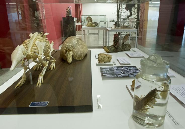 Restos fósiles y otras recreaciones de animales.