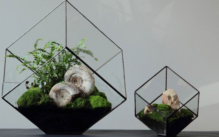 Simple tips on how to get the best from terrariums, wonderful enclosed gardens   that were popular in the Victorian era.