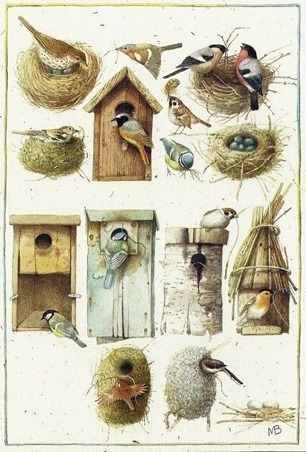 Bird nests and Homes - Marjolein Bastin