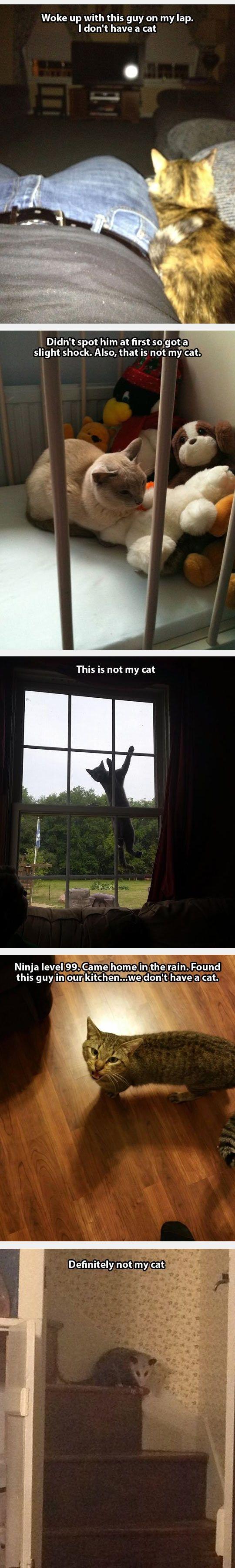 That's not my cat. Lol.
