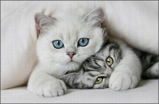 40 прекрасный и сладкий, животное картинки на День Святого Валентина   животные и животные картинки   симпатичные лапы