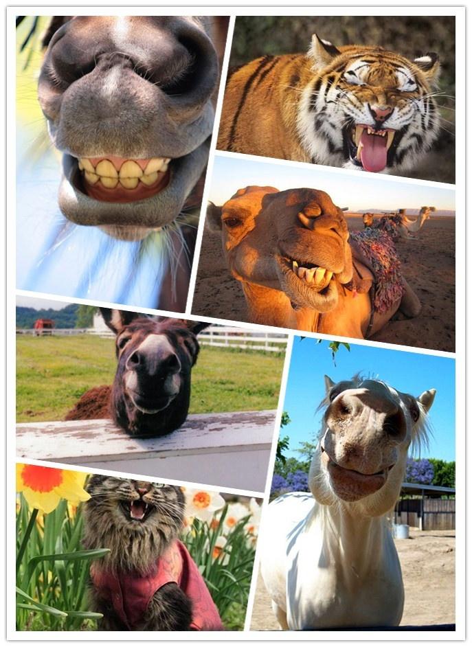 Animal smile