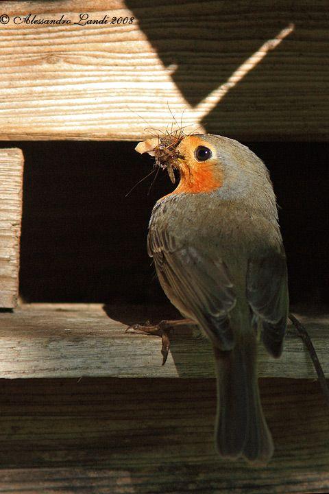 les 174 meilleures images du tableau nichoirs pour petits oiseaux sur pinterest petits oiseaux. Black Bedroom Furniture Sets. Home Design Ideas