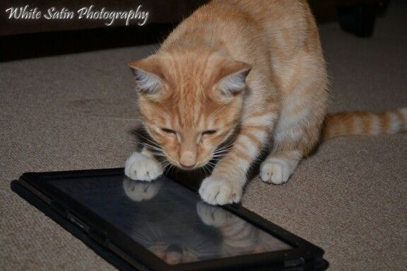Cat. Animal photography