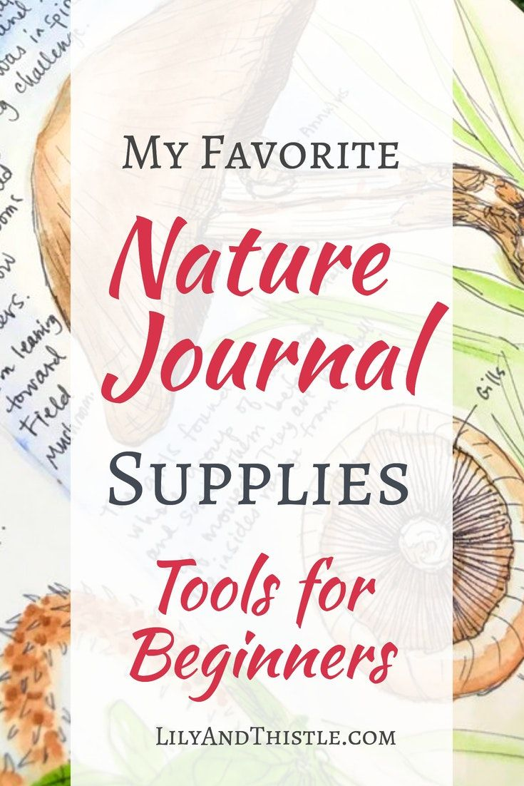 Nature Journal Supplies For Beginners From Watercolor Sets To The