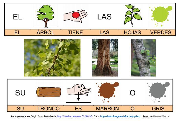 Mapa semántico sobre el Árbol (lámina 5), A través de esta actividad, podremos trabajar la comprensión y la expresión oral, así como la adquisición de vocabulario. http://informaticaparaeducacionespecial.blogspot.com.es/2009/03/actividades-generadas-partir-del-mapa_20.html