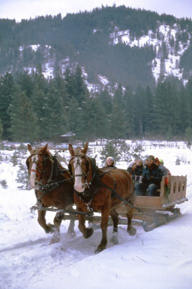 Horses Pulling Sleigh Full of People in Winter near Red Tail Canyon Farm (near Leavenworth) - Red Tail Canyon Farm near Leavenworth (Washington State Tourism)