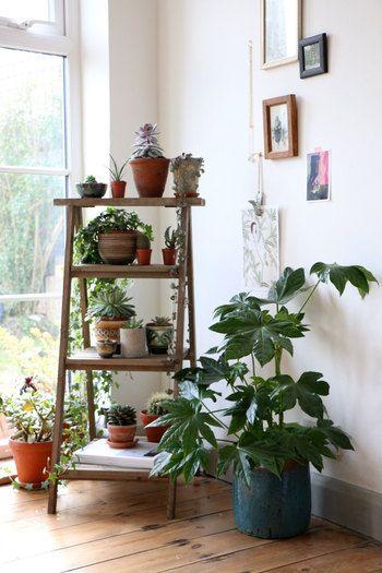 普段は屋外に出している植物も屋内に移動すると、置く場所に困ってしまいますよね。特に小さな鉢植えが多い時は一か所に集めて、立体的にディスプレイするのがおすすめ。窓際の日当たりの良い場所にラダーシェルフを置いて、小さな鉢植えをコンパクトにまとめれば水やりも簡単!しかも、ショップのディスプレイみたいでとってもオシャレ。