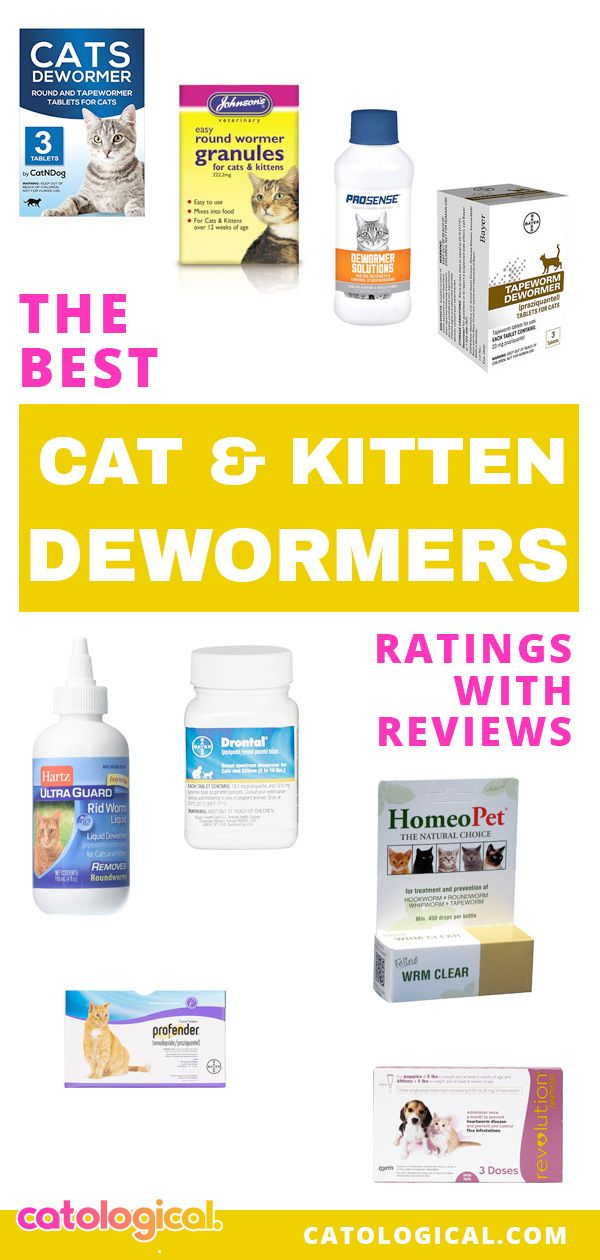 Best Cat Dewormer For Roundworms Tapeworms Otc Prescription Cat Dewormer Cat Medicine Cat Care