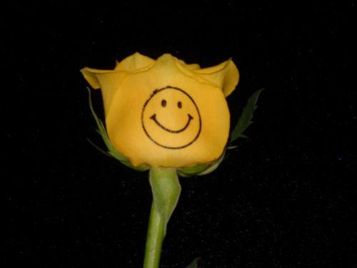 grunge, tumblr, pale, aesthetic, site model, rose, yellow, flower, dark, smile, emoji, happy