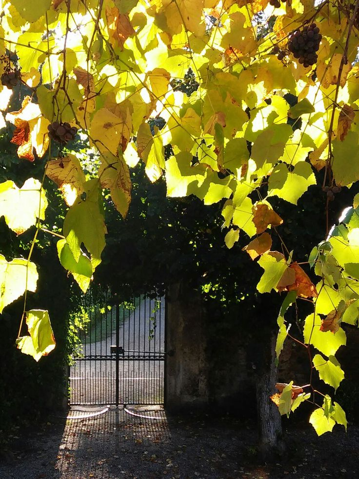 #Autumn in the place where I live and work
