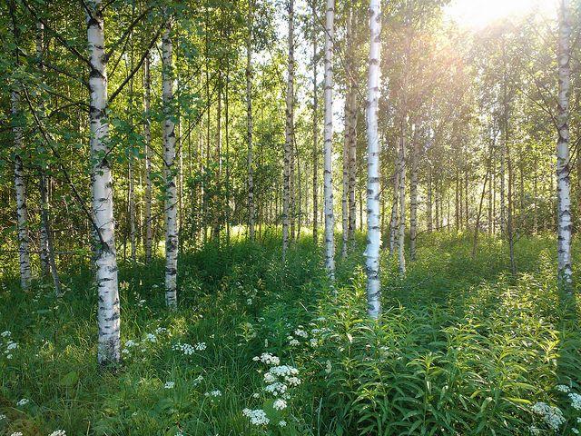 Finnish summer