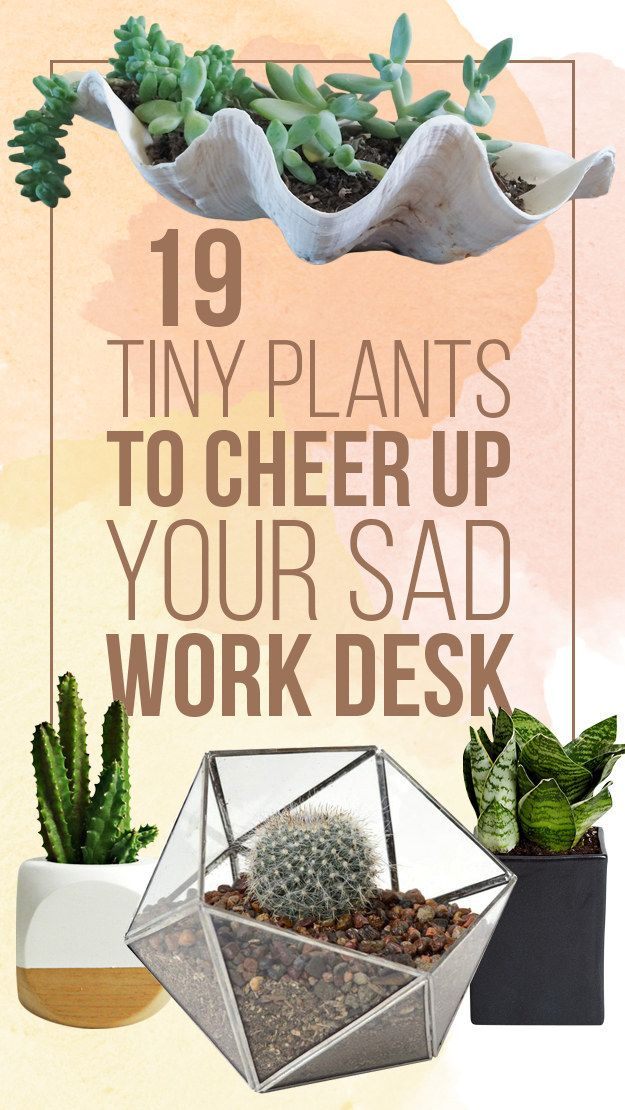 19 tiny plants to cheer up your sad work desk. (And also pretty planters.)