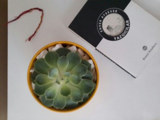 #succulent #sukulent #çakil #sarı #saksi #pebble #yellow #pot