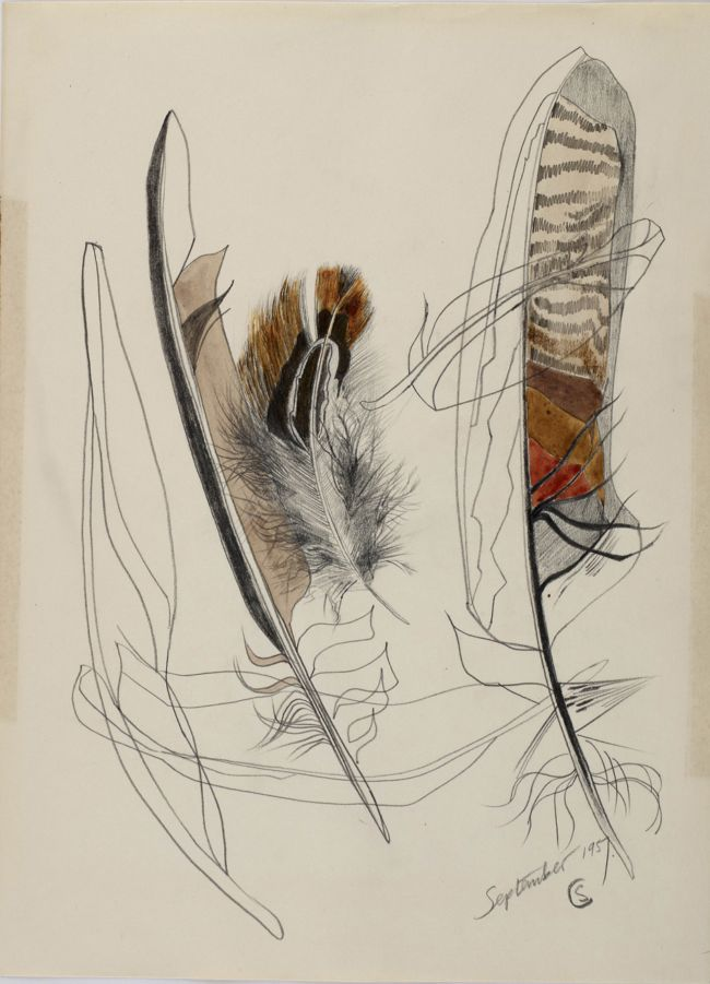 Pencil drawing of a group of feathers, with added watercolour on three of the drawings