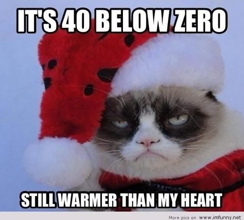 Funny Christmas List Meme : Best images about grumpy cat on pinterest blood types