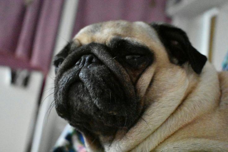 Drsnej pohled Žofie Pug