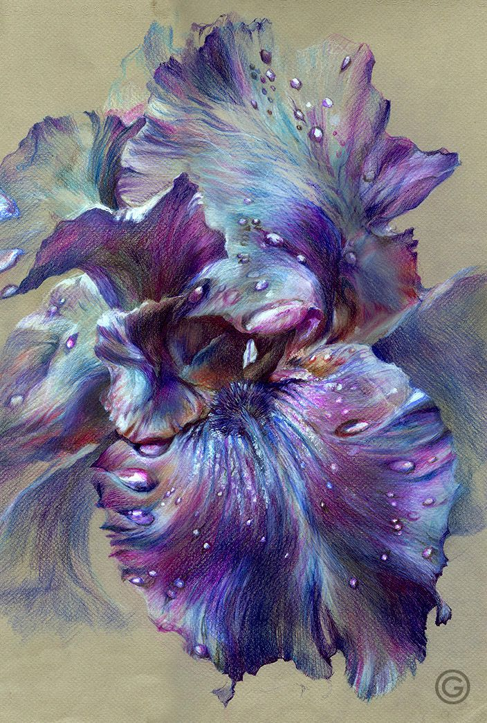 """ Iris "" (color pencil, 32Х48, 2014) Not mine, but beautiful shading!"