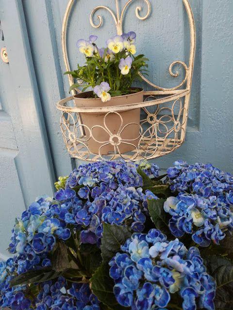 Spring, hydrangea, violets Romppala - Lindan pihalla