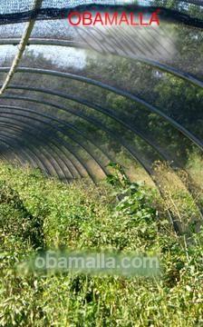 Una casa sombra construida con malla sombra 35% o 50% permite un mejor desarrollo vegetal en hortalizas.