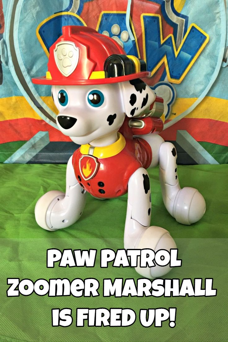 Paw Patrol Zoomer Marshall is FIRED UP!