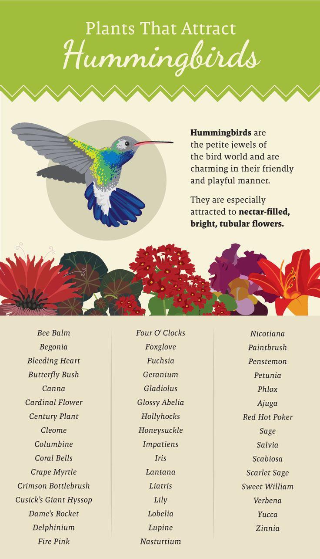 Plants That Attract Hummingbirds - Plant a Pollinator-Friendly Garden