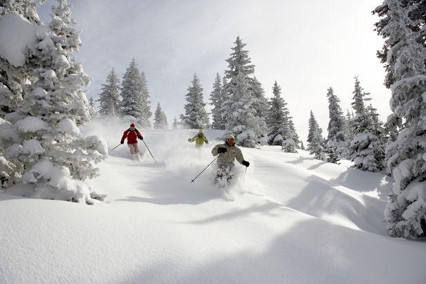 Vail Skiing | Terrain | Profile | OnTheSnow