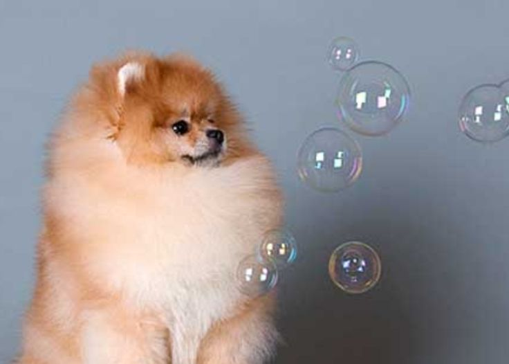 The Best Way to Clean Pomeranian Bedding