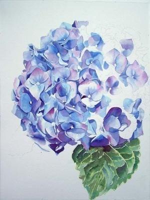 Hydrangea watercolor by VenusV                                                                                                                                                                                 More