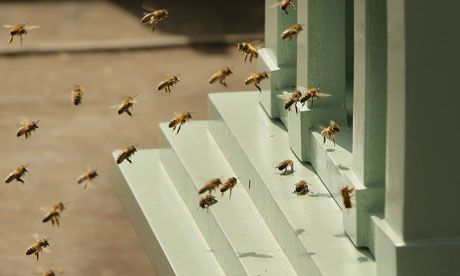 Weatherwatch: the dry spring and bees | Fortnum, mason, Bee, Wild bees