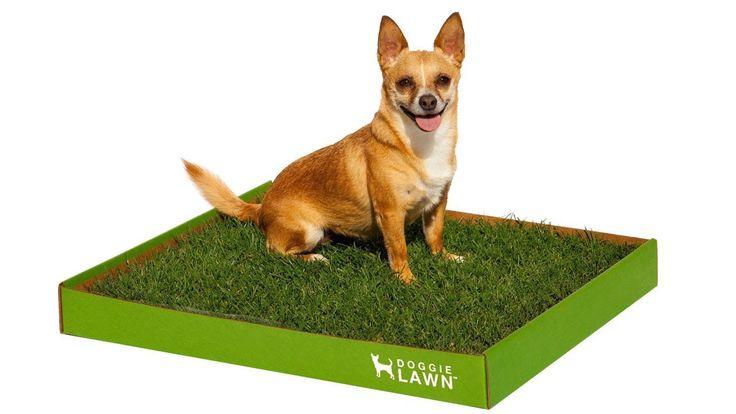 1000 Ideas About Indoor Dog Potty On Pinterest Dog