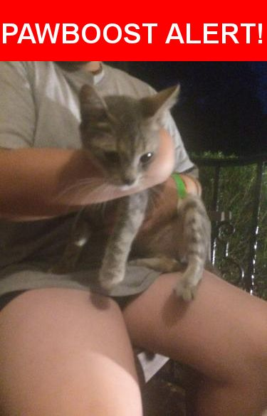 Is this your lost pet? Found in Fayetteville, NC 28304. Please spread the word so we can find the owner!  Young light gray striped cat. Very friendly.  Near Murray Hill Rd & Jura Rd.