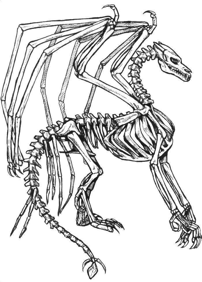 skeleton bone dragon coloring pages dragon coloring pages kidsdrawing free coloring pages online