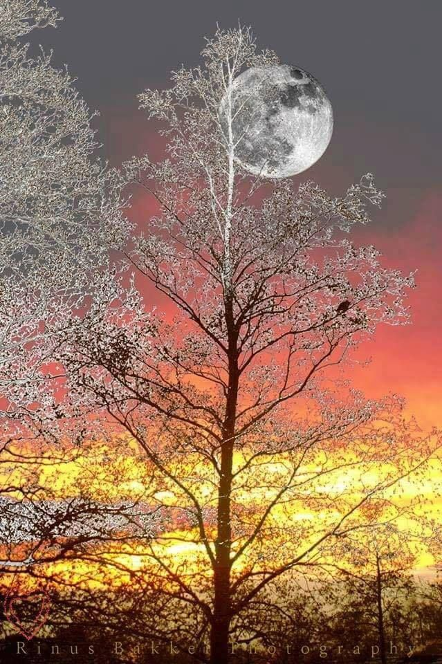 3900 best images about The Sun and Moon on Pinterest ...