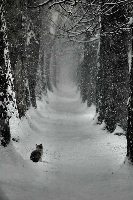 Cat in snowCat, Winter Photography, Snow, Winter Wonderland, Kitty, Christmas Photos, Outdoor Christmas, Animal