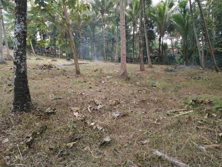 Tanah Murah Dijual Cepat Kulonprogo Yogyakarta Dekat RSUD Wates