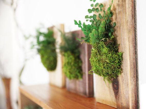 Hanging Fern and Moss Rustic Wood Flat   Care Free by ArtisanMoss,