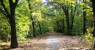 Imagini pentru domeniul cantacuzino floresti