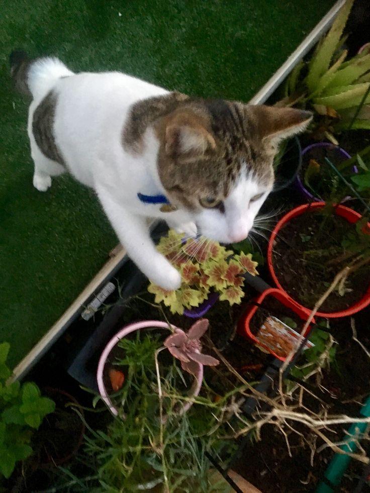 Jack pretending to help garden