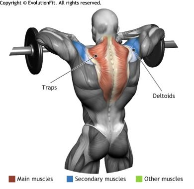 TRAPS -  STANDING BARBELL UPRIGHT ROW